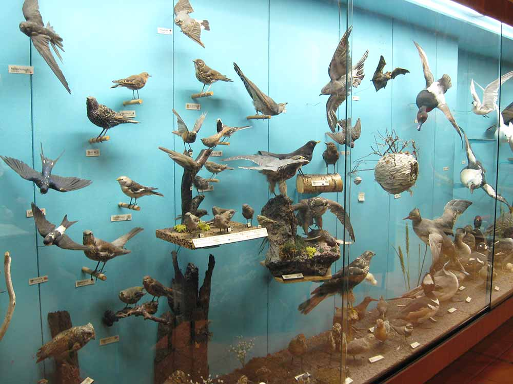 The aquarium in Westman Islands